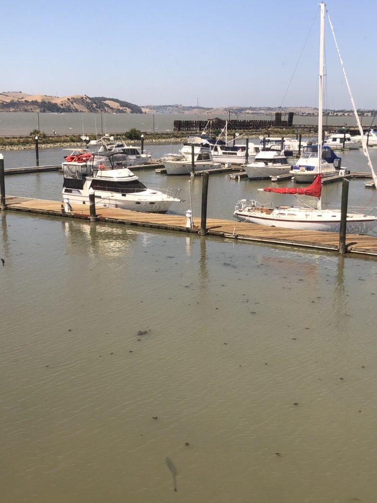 Martinez Marina Guest Dock